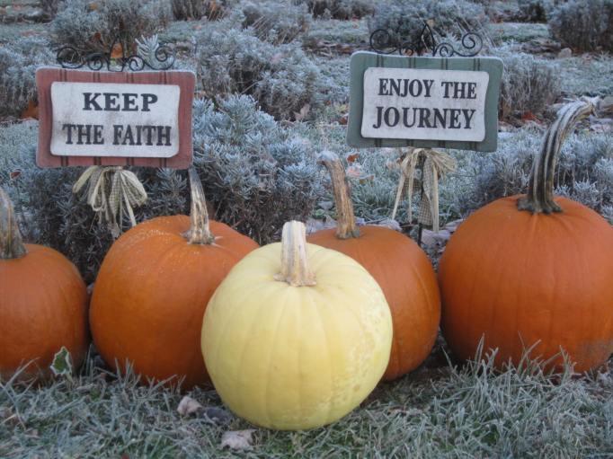 pumpkin_0834